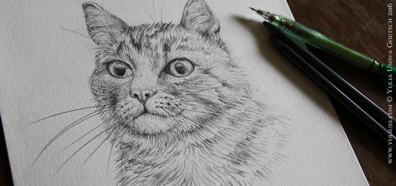 chat strasbourg
